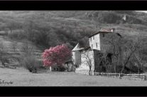 La maison Gruyère au printemps